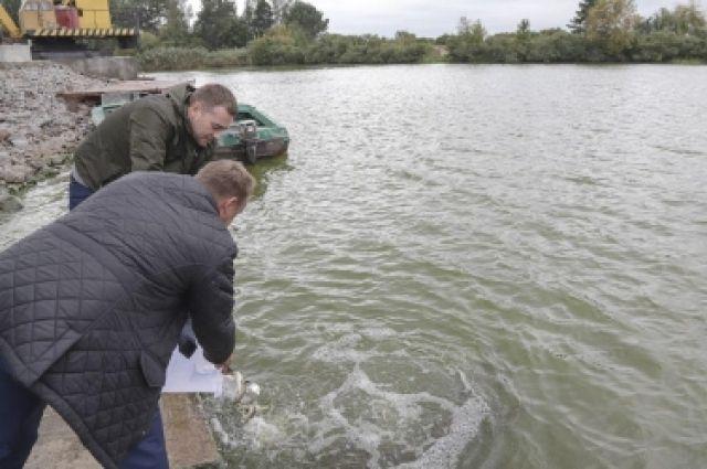 Киевское водохранилище было зарыблено впервые за последние семь лет