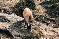Не подкармливайте диких животных, призывают специалисты