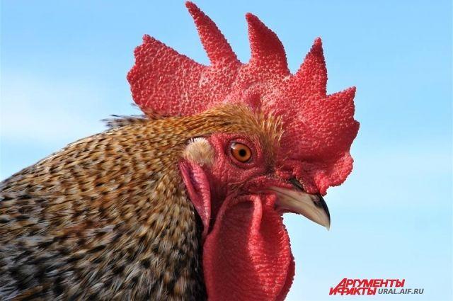 Тюменская птицефабрика ввела в эксплуатацию новый птичник