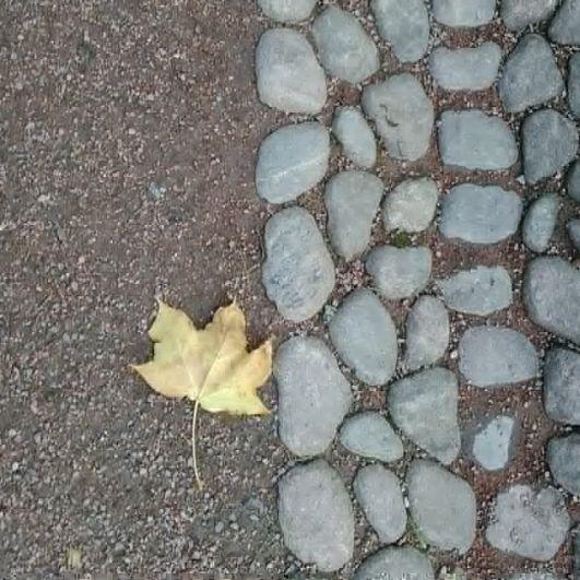 Яркая осень.
