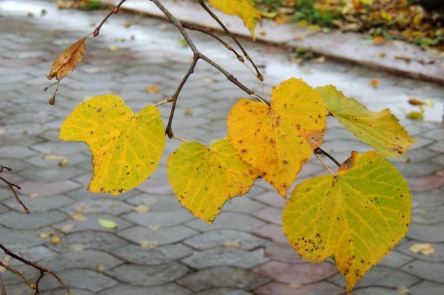 В первые дни октября будет  ветрено.
