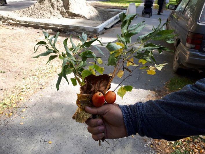 Экспромт с яблоками.