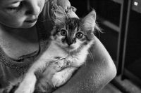 Из тюменского «концлагеря» на Мельничной сбежала одна кошка