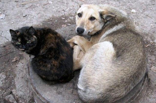 В Херсоне передумали уничтожать из-за опасной болезни бездомных животных