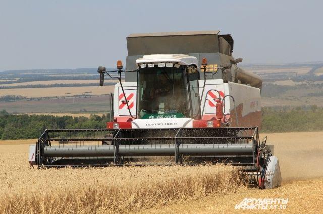 Убрать пшеницу с полей успели еще не все.