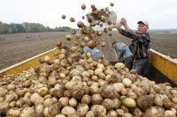 В минсельхозе считают уборочную кампанию этого года успешной