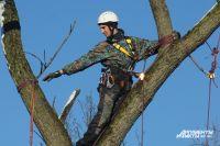 Обрезать сучья и рубить деревья нужно по правилам.