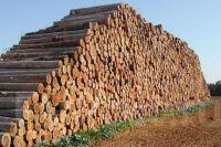 Порошенко подписал закон о сохранении лесов Украины