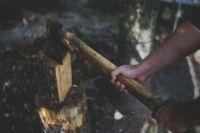 Суд назначил тюменцу 1,5 млн рублей штрафа за вырубку почти 200 сосен