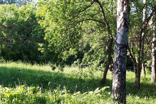 В тюменской Гилевской роще ученые нашли следы древних поселений