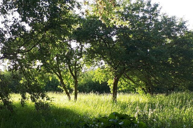 Тюменцы примут участие во Всероссийской осенней уборке леса