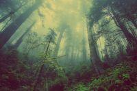 Поиски пропавшей в лесу бабушки не прекращались и ночью.