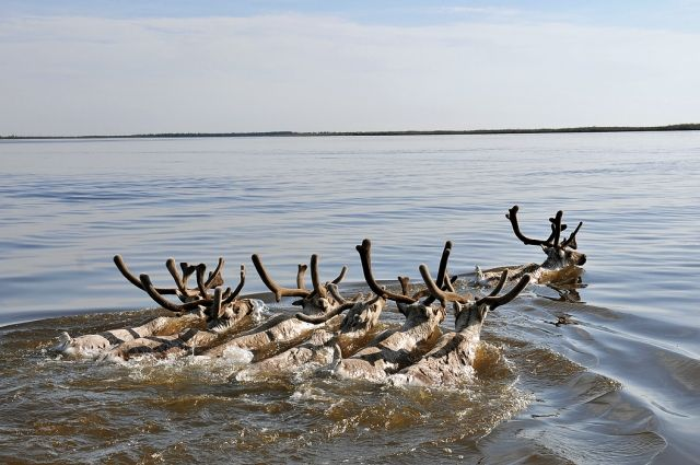 Животные - неотъемлемая часть экосистемы.