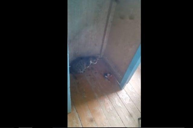 Видео: в ОГПУ кошка родила котенка на лекции.