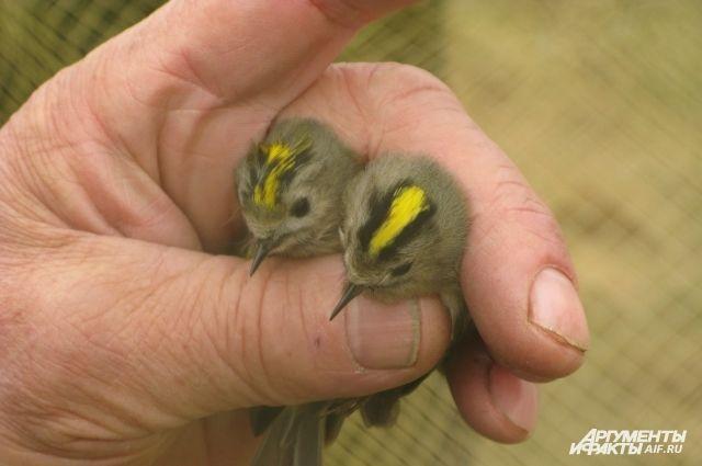 На Куршской косе будут считать перелетных птиц.