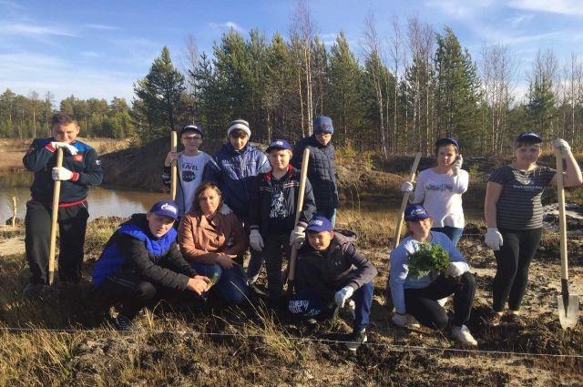 Ноябрьские волонтеры посадили 500 саженцев сибирской пихты