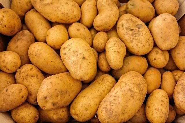 Тюменский КРиММ собрал более 100 тысяч тонн картофеля, побив новый рекорд