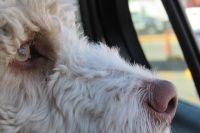 На тюменском кладбище обнаружили собаку, стерегущую могилу хозяина