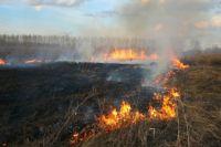 В поле подожгли сухую траву.