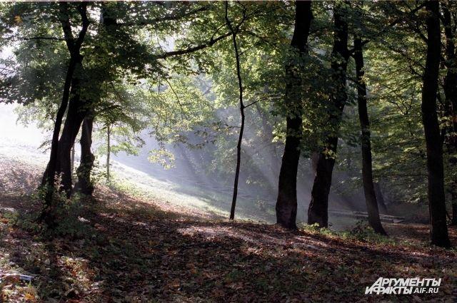 В лесу под Правдинском потерялась ушедшая за грибами женщина.