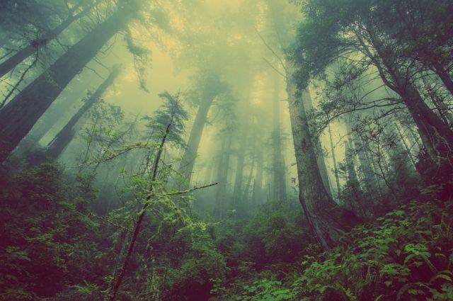 Мальчик ушёл в лес один.