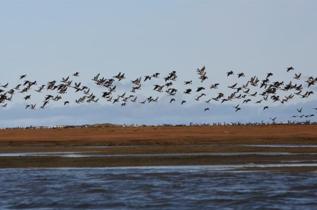 Ямальцы примут участие в конгрессе по биоразнообразию в Арктике
