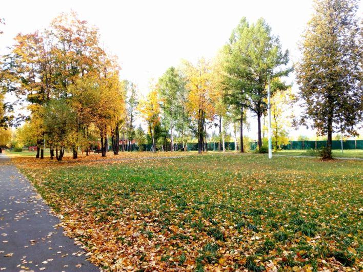 Солнечный день в парке.