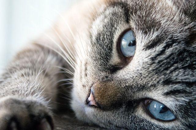 Жительница Пермского края ищет в Оренбурге кота.