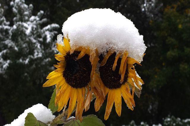 На этой неделе ожидается первый снег.