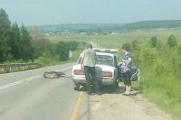 Как правило, животные погибают при столкновении с автомобилем.