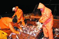 Рыбакам приходится биться за уловы даже ночью.