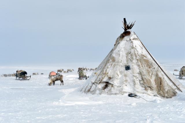 Тюменцы смогут увидеть «Тепло ямальской Арктики»
