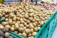 От больного картофеля может заболеть и человек.