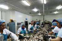 В Салехарде выберут лучшего обработчика рыбы