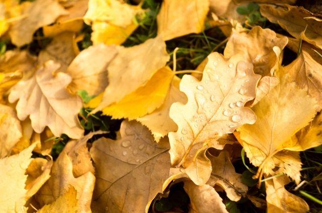 На смену теплой осени идет сезон предзимней прохлады.