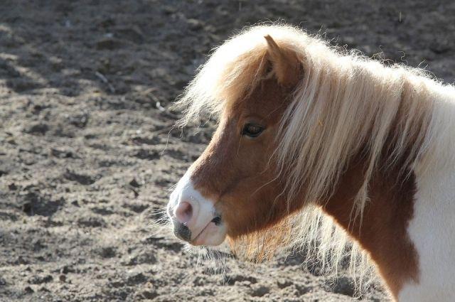 За кражу пони женщине грозит 5 лет лишения свободы.