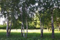 В Тюмени депутаты обсудили стратегию озеленения города до 2040 года