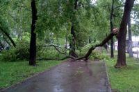 Дерево упало ещё 9 октября.