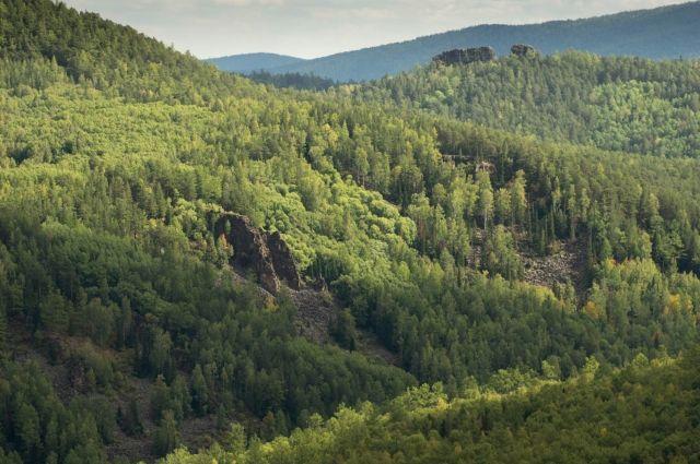 Евросоюз пригрозил Украине иском в суд из-за запрета на вывоз леса