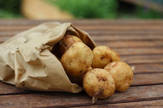 Жители Кодинска покупали картофель с нитратами.