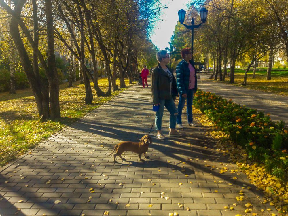 Другие гуляют со своими любимцами.