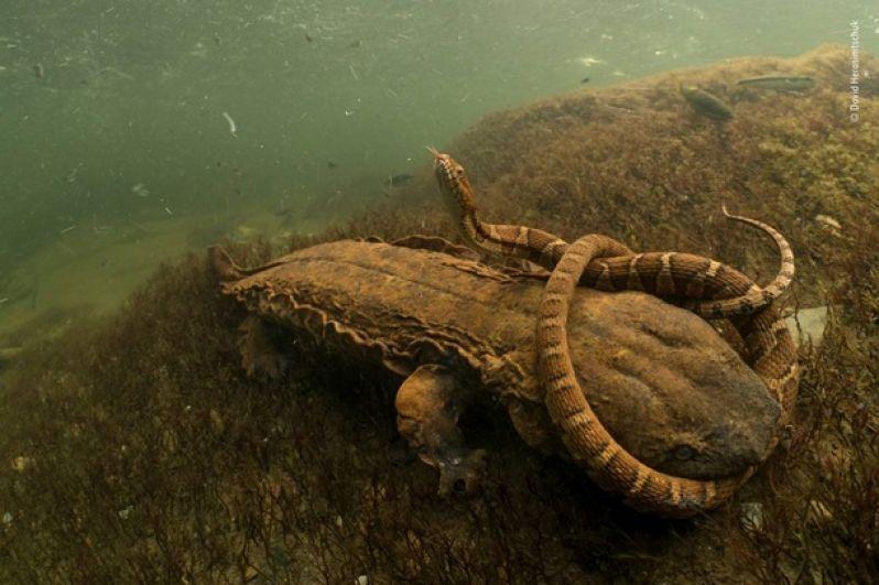 Подводный мир очень необычный. Никогда не знаешь, кого можно увидеть на морском дне.