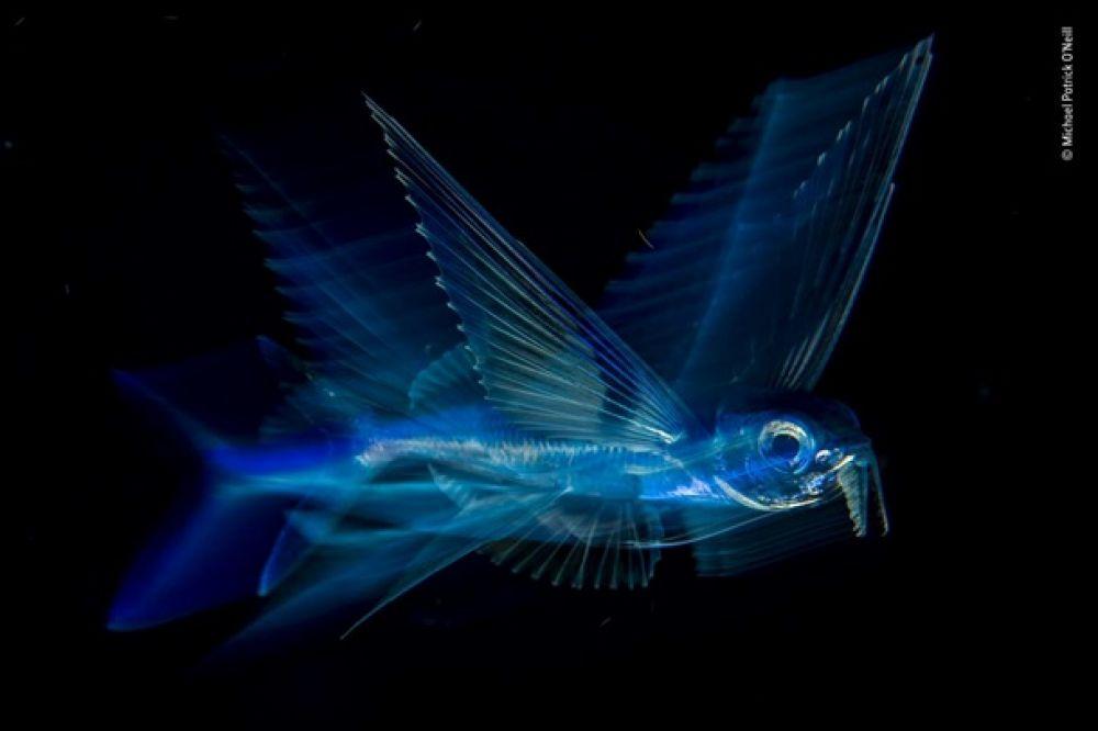 Бывают ли летучие рыбы? Судя по этому снимку, бывают.