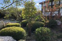 Место для созерцания. В каком саду живут драконы, духи и Боги?
