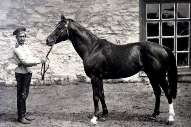 Донской казак с племенной лошадью донской породы 1908-1914 гг.