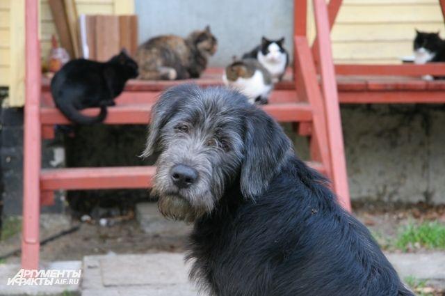 Организацию помощи бездомным животных подозревают в мошенничестве.