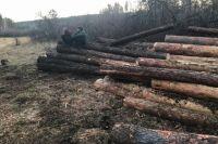 Лес часто вырубают в Сибири незаконно.