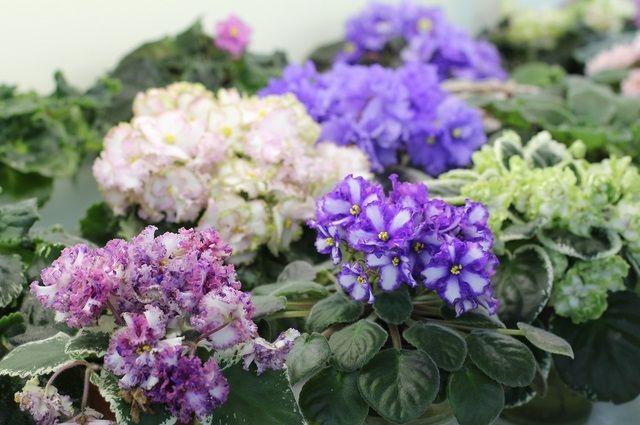 В Тюмени оценят цветочное оформление школьных кабинетов биологии