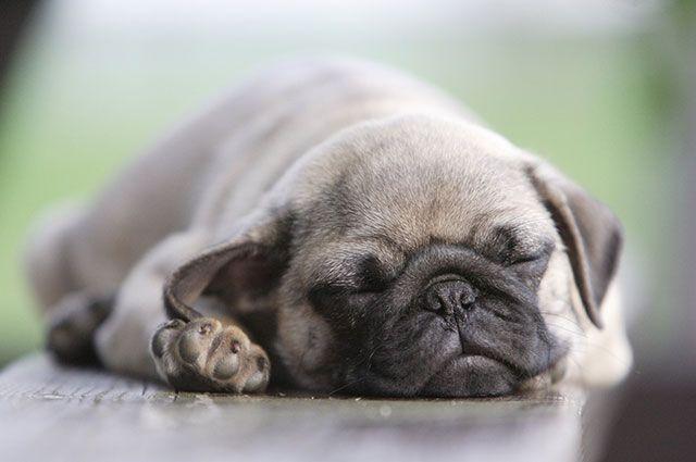 Уснуть или заснуть – как правильно?