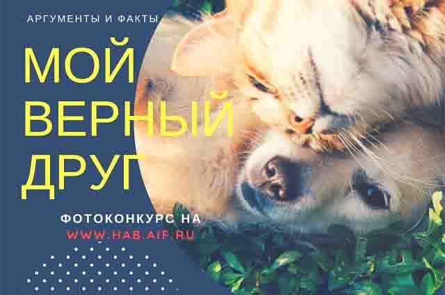 В Хабаровском крае завершился фотоконкурс.